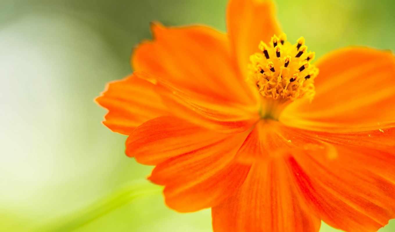 цветок, фотографий, creativ, лепестки,
