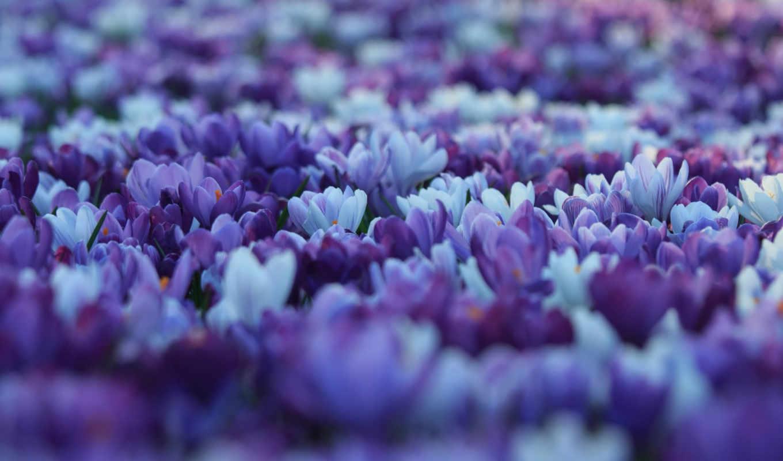 desktop, world, цветы, flowers, ecran,