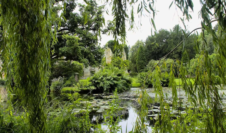 лес, широкоформатные, images, заставки, качественные, природа,