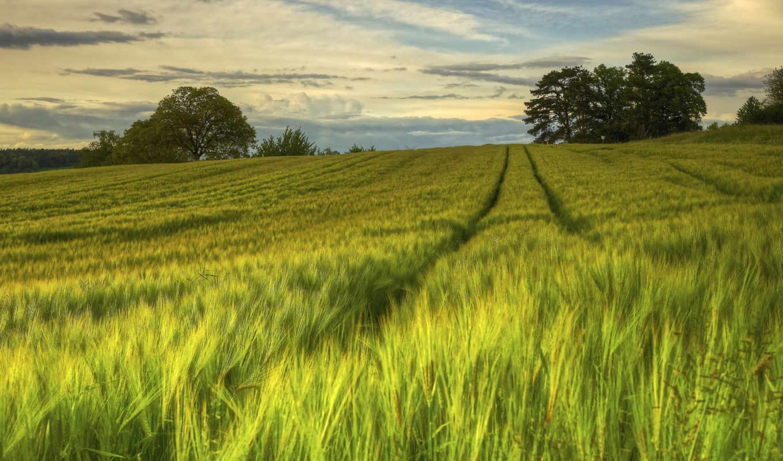природа, поле, sweden, swedish, бесплатные, картиники, поля, трава, summer, модели, кфх,