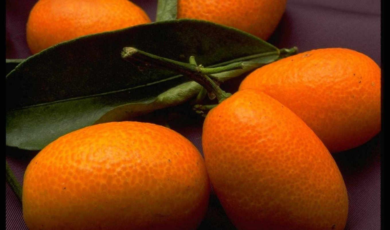 фрукты, ягоды, net, turbobit, depositfiles,