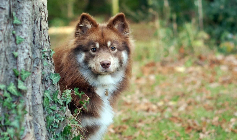 взгляд, собака, друг, картинку, картинка, собаки, animals, dogs, shepherd, животные, мыши, кнопкой,