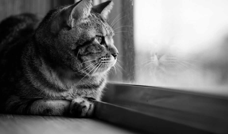 картинку, кот, чёрно, кошки, белый, серый,
