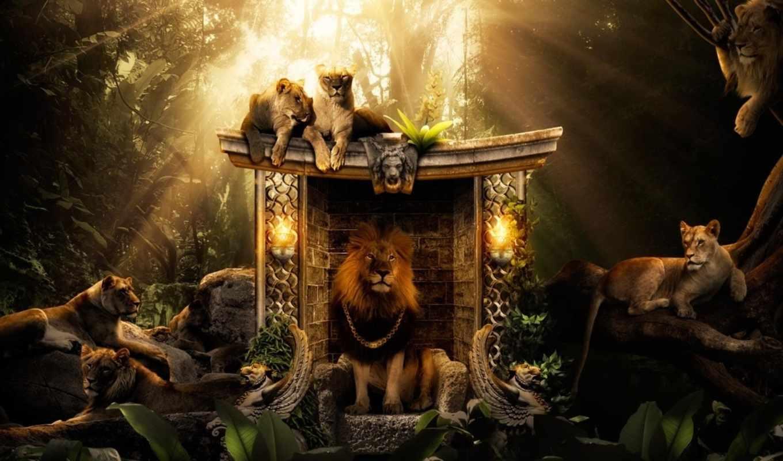 lion, pride, king, зверей, внесите, янв, jungle, вашу, life, львица, креатива,