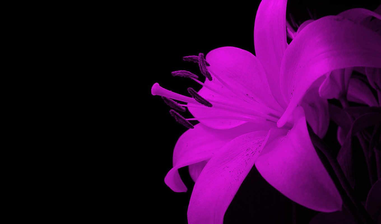цветы, yellow, flowers, free, качество, desktop, high,