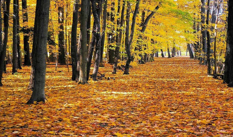 природа, осень, листва, графика, нов, желтая,