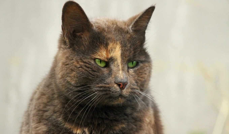 кот, angry, funny, глаза, looks, фон, best,