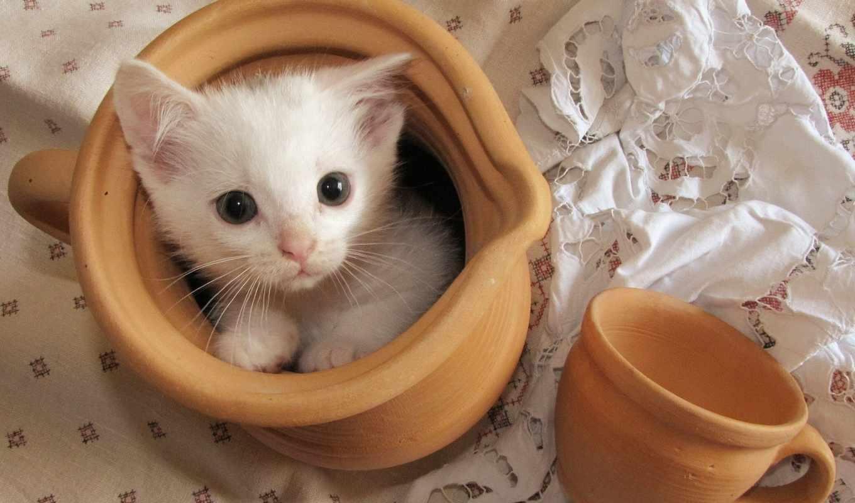 котята, кот, войдите, найти, зарегистрируйтесь, других, contact, широкоформатные,