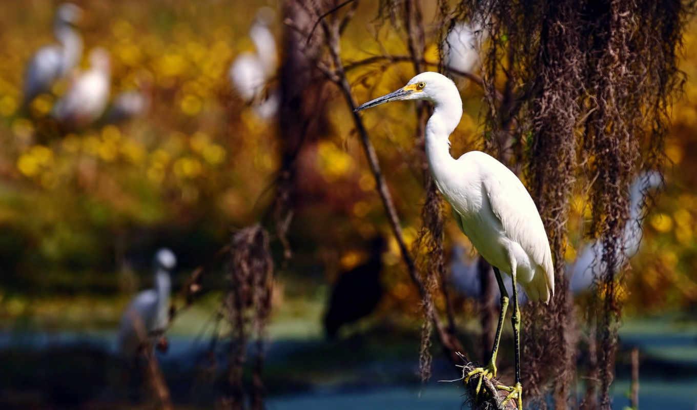 птица, природа, птицы, summer, свет, февр,