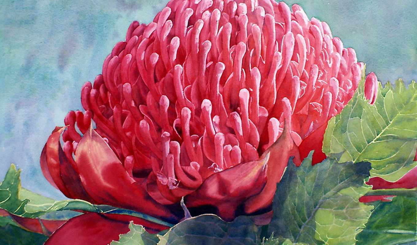 живопись, print, waratah, cartwright, joe, red, art, watercolor, canvas, you, цветы, нефть,