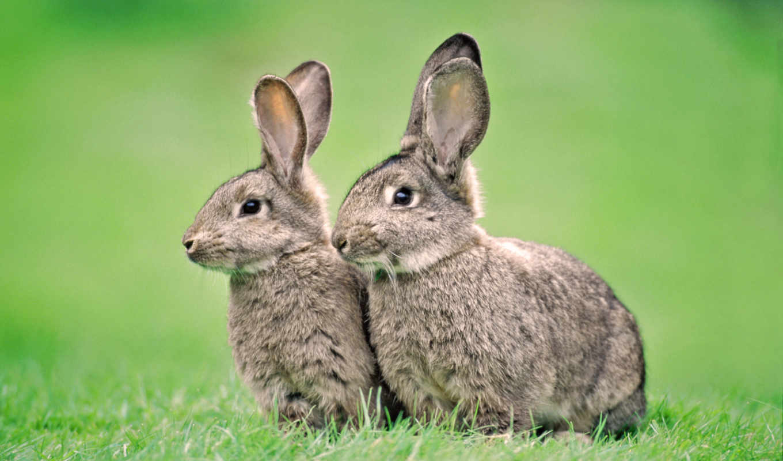 кролики, кроликов, комбикорм, комбикорма,