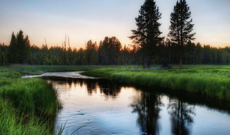 природа, деревя, россия, зелёный, утро, река,