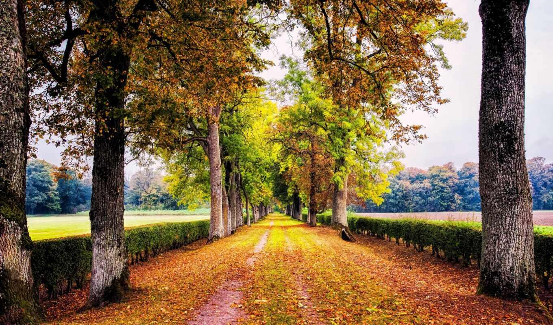 осень, аллея, дерево, природа, park, листва, дорогой