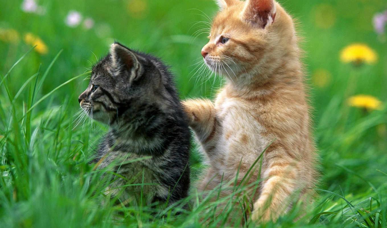 рыжий, серый, kittens, animals, котенок, homepage, котята, кот, животные,