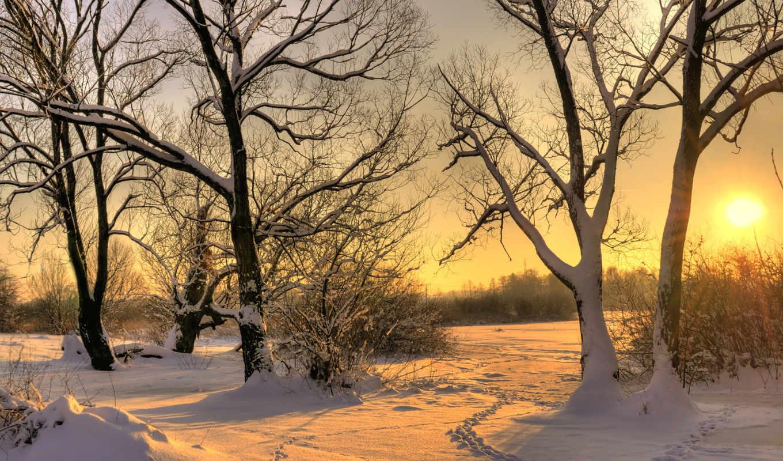 зима, деревья, снег, солнце, пейзаж, следы, закат, снегу, картинка,