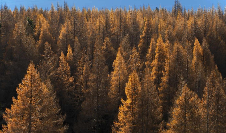 февр, pictures, nature, лес, деревья,