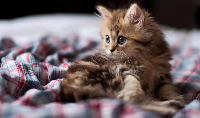 котенок, кот, смотреть, морда, красивые,