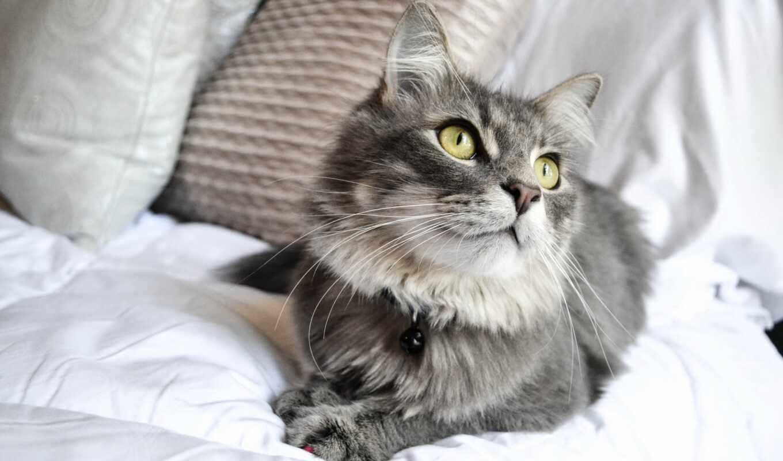 кот, essendon, vet, pet, клиника, марк, fish