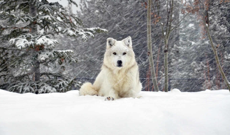 собака, снег, зима, смотрите, еще, другие,