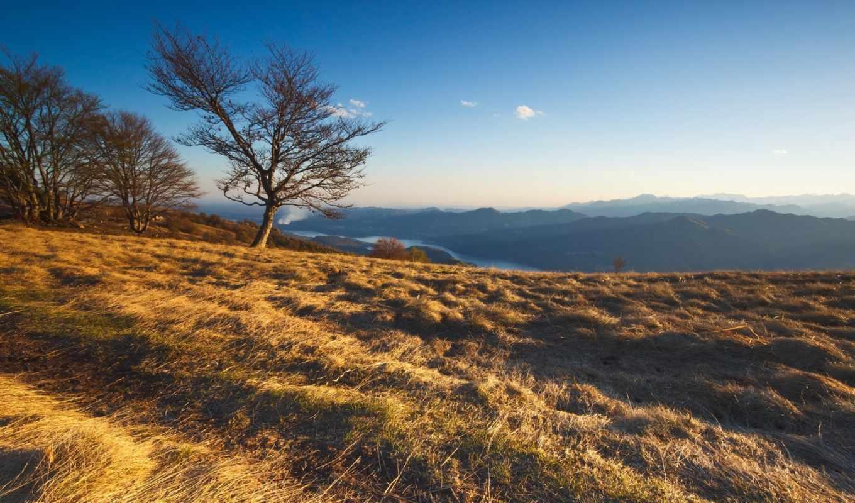 природа, горы, трава, деревья, картинку, картинка,