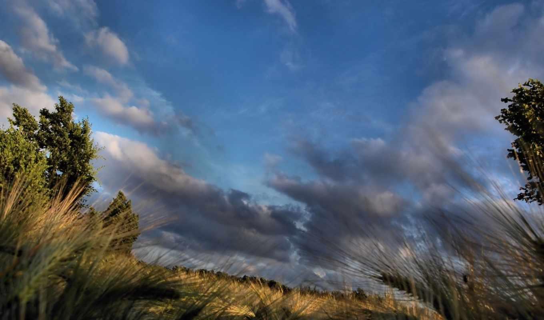 поле, небо, ночь, природа,