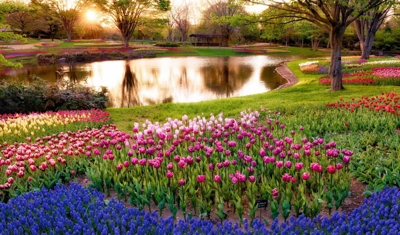природа, весна, разделе, красиво, флот,