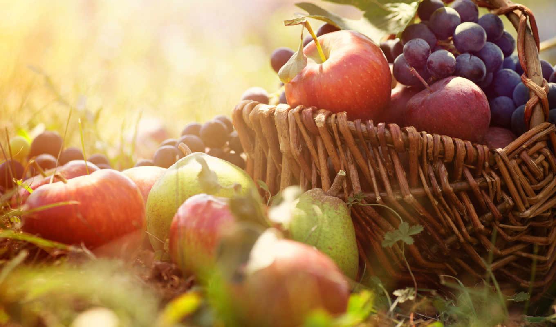 урожай, фрукты, овощи, eда, урожая,