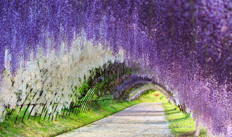 kawachi, фудзи, gardens, garden, туннель, кавати,