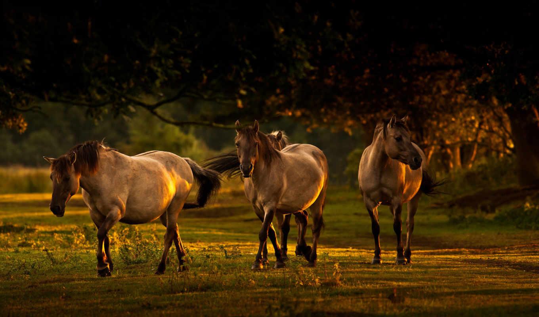 лошади, лошадь, кони, horses, природа, трио, going