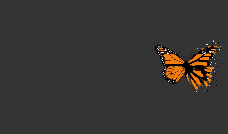 минимализм, бабочка, серый, смотрите, похожие, монитора, экрана, креатив, номером,