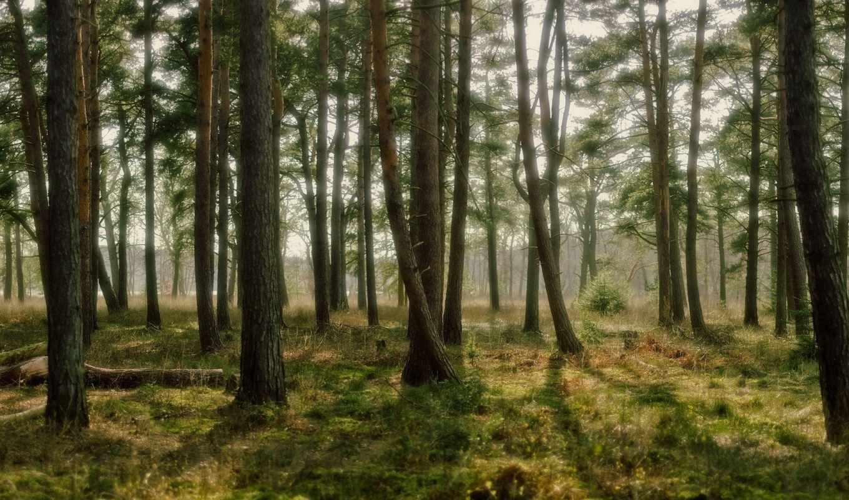 лес, природа, деревья, трава, свет, роща,