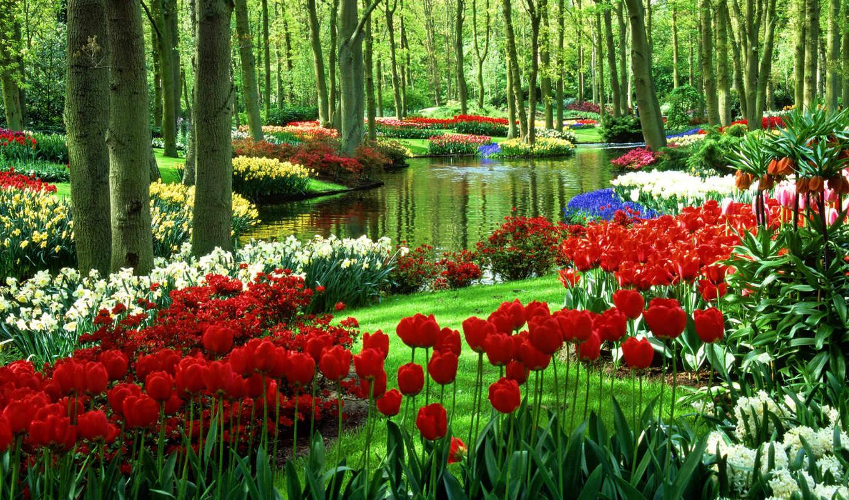 цветы, тюльпаны, нидерланды, иллюстрации, любой, вкус, color, красивейших,