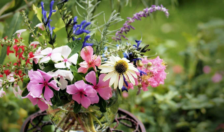 цветы, букет, ваза, цветов, вазе, полевые, бальзамины, эхинацея,