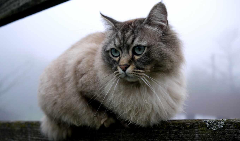 кот, gato, зеленоглазый, раза, био, sie, die, health, mental, пушистый