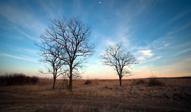 природа, деревья, весна, rboles, лес,