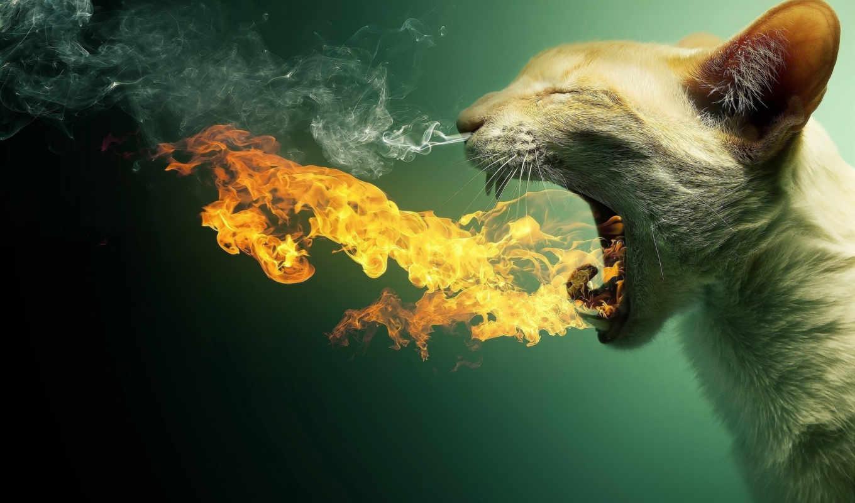 chat, crache, feu, file, sur,