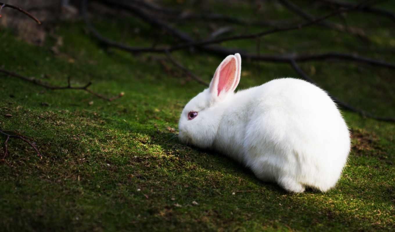 кролик, white, лесу,