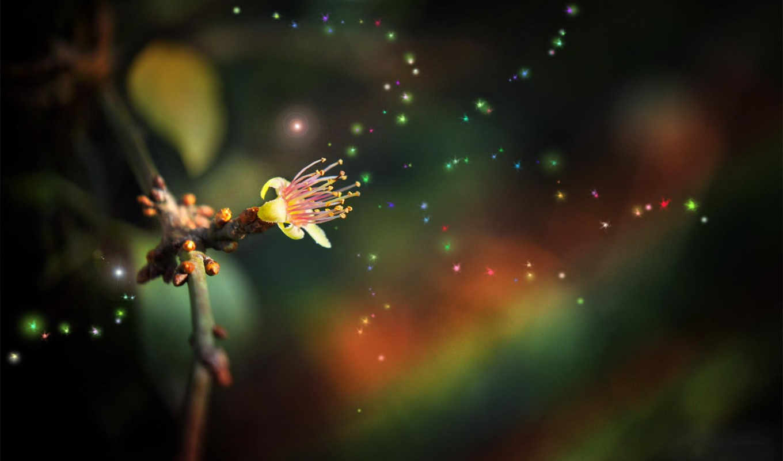 ,цветок,огоньки,ваниль,