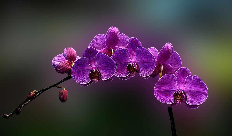 цветы, you, world, flowers, орхидея, orchids,