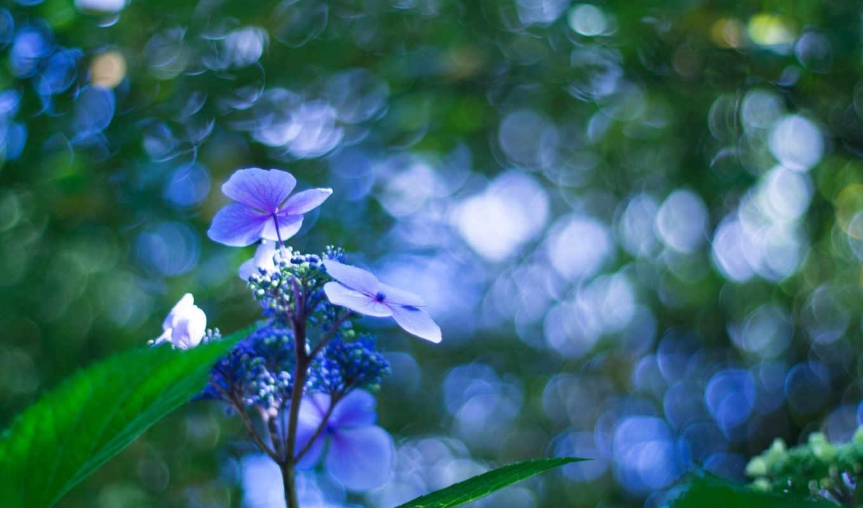 без, названия, цветок,
