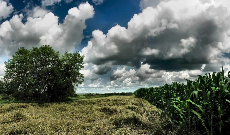кукуруза, небо, облака, картинка, storm, beginning, nature,
