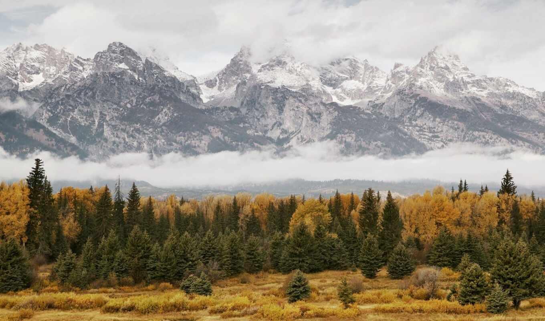 осень, national, гранд, grand, park, природа, landscape, teton, облако, дерево, лес