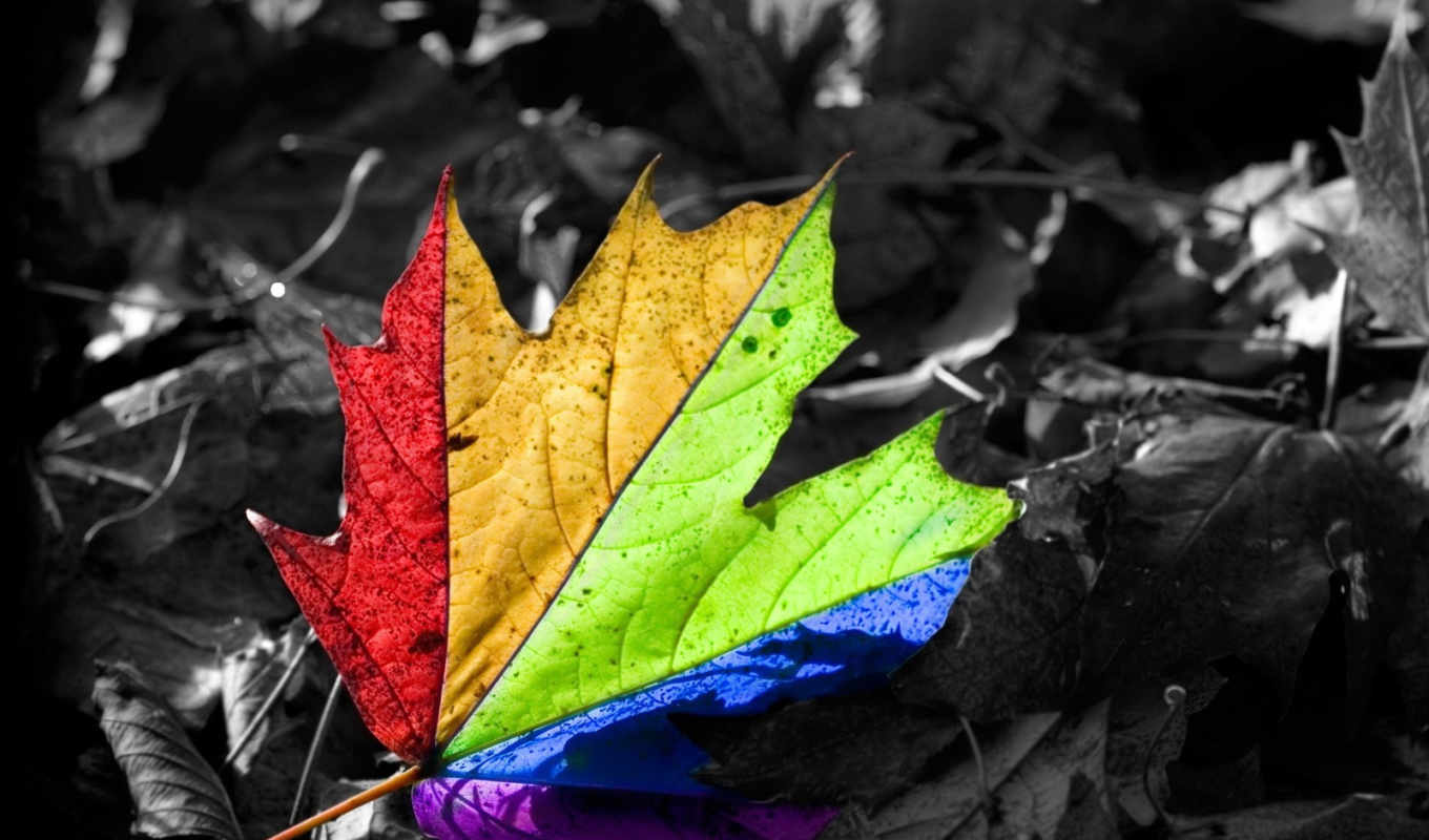 leaf, you, , view, size, image, page, sonidos, photography,