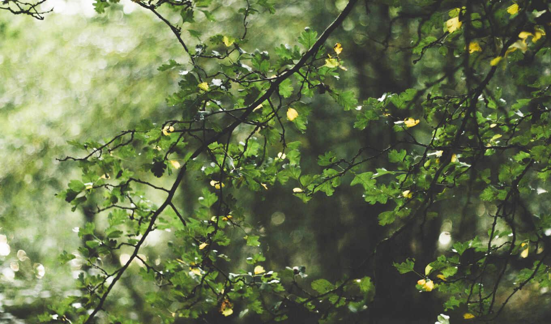 зелёный, листва, ayat