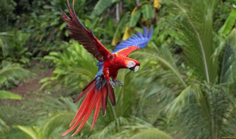 птиц, красивых, павлин, птицы, самых, самые, самое, списке, первое, место, красивые, мира, мире,