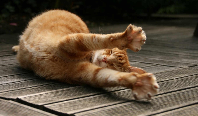 кот, если, кота, нечто, дек, red, июня,