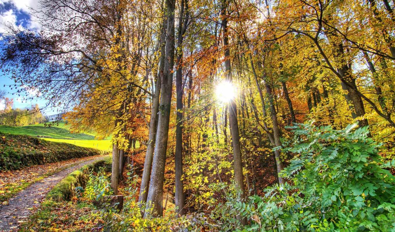 лес, hdr, природа, осень, wide, часть,
