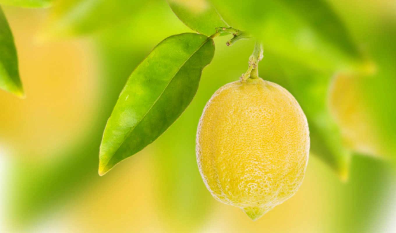 lemon, лимона, зооклубе, фруктов, ягод, дольки, лимоны, цитрусы,