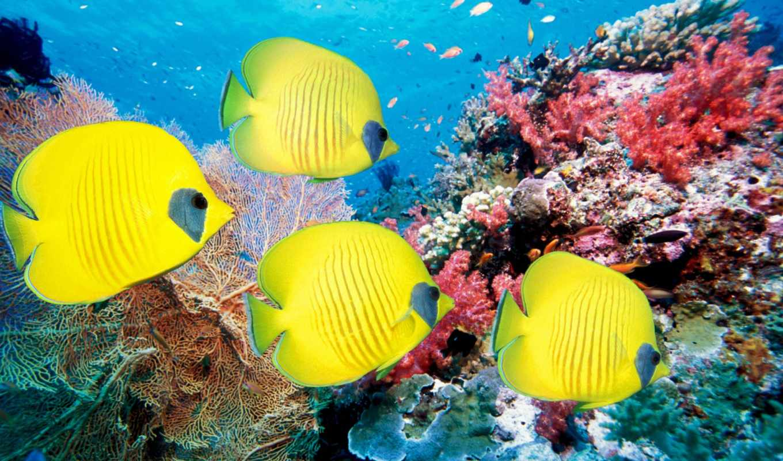 рыбки, кораллы, море, pisces, world, underwater, широкоформатные,