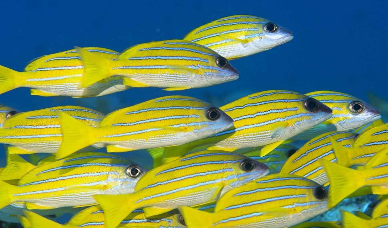 world, underwater, pisces, морские, рыбки, fish, красивые, океана, природа, коралловые, рифы,